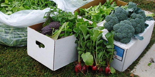 Think Green Thursday: Fall Vegetable Gardening