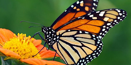 Day Camp for Kids:  Butterflies in the Prairie tickets