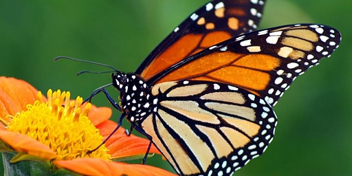 Day Camp for Kids:  Butterflies in the Prairie
