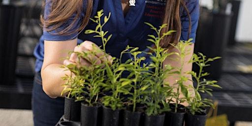 Back To Basics Plant Propagation 101: Cuttings