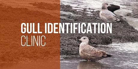 Confusing and Complex Gulls - Gull Identification Workshop tickets