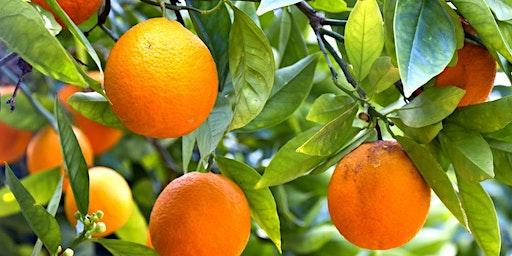 Seminar: Citrus!