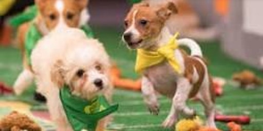 Cosmic Brewery Presents Superbowl/Puppybowl Party