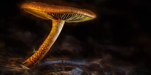 Learn from the Expert - Mushroom Macro Photography