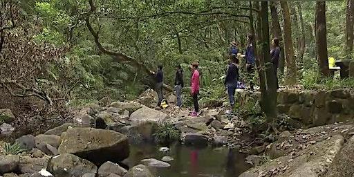 一月森林浴體驗:大埔滘之旅