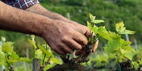 Weinverkostung Trentino Südtirol Tickets