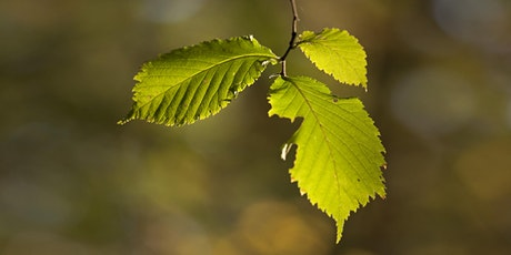 Tree walk at Sheffield Botanical Gardens tickets