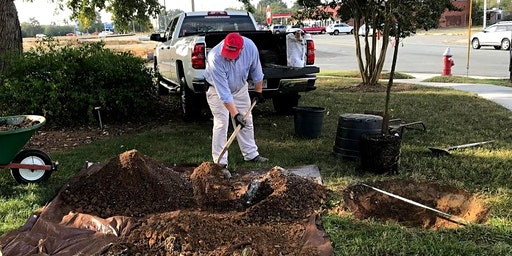Think Green Thursday:  Planting Trees and Shrubs