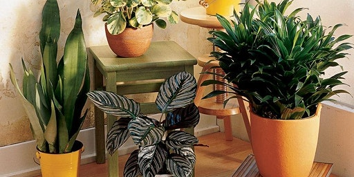 Think Green Thursday:  Houseplants