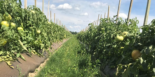 Cover Crops in Vegetable Production Systems: Tools and Techniques