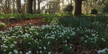 A Vision of White- Exploring Ickworth's Snowdrops tickets