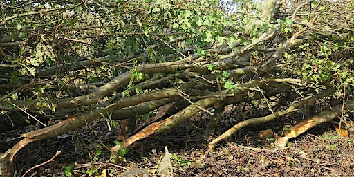 Have a Go: Hedgelaying