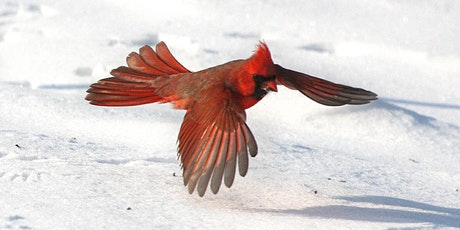 Think Green Thursday:  Winter Resident Birds tickets