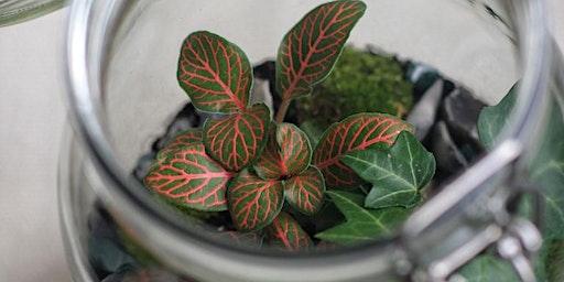 Valentine's Terrarium Workshop with Little Drop of Green
