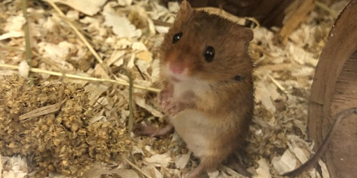 Harvest Mouse Training
