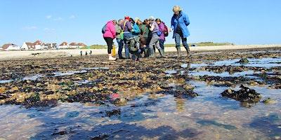Intertidal Survey - Thorness