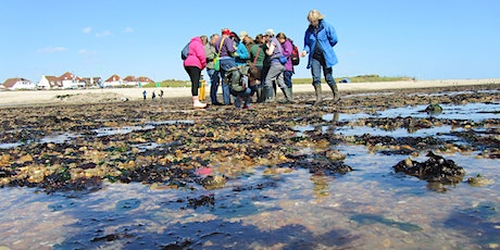Intertidal Survey - Keyhaven tickets