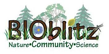 5th Annual Urban BioBlitz