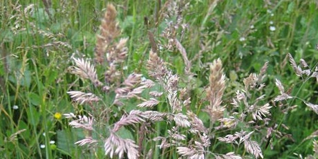 Grasses for Beginners tickets
