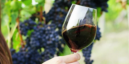 Learn About Wine: An Introduction to Wine