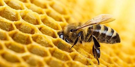 Bee Forum tickets