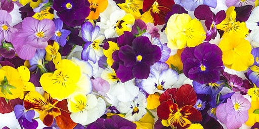 Incredible Edible Flowers