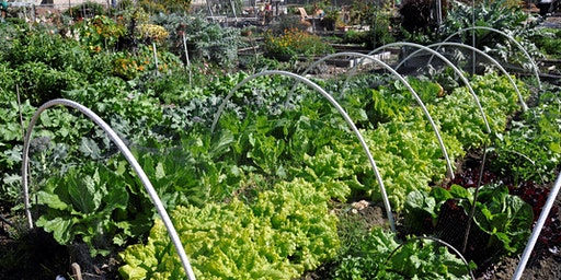 Community Gardens Tour & Volunteer Work Day