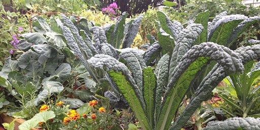 Edible Landscaping and the Eco-Yard