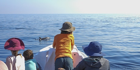 Incontra i delfini a Catania | Dolphin watching eco-tour tickets