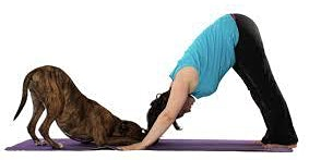 Doggie Yoga 6