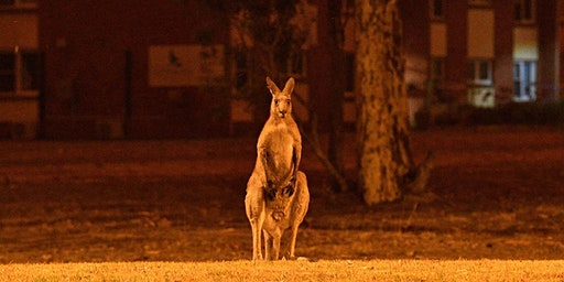 Fundraiser to Aid Australian Wildlife at ACME Downstairs