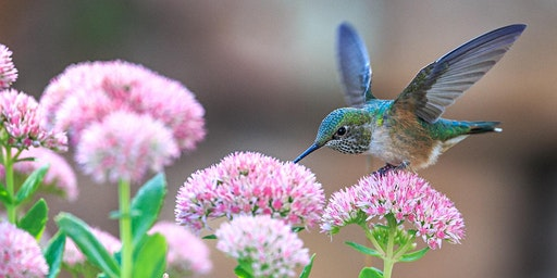 Planning and Planting for Pollinators