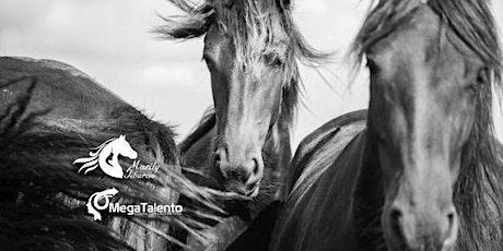 Constelaciones privadas con caballos entradas