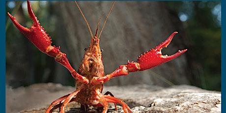 CrawFly Invertebrate Neurophysiology Course Summer 2020 tickets