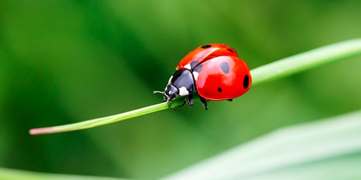Pest Management & Beneficial Insects