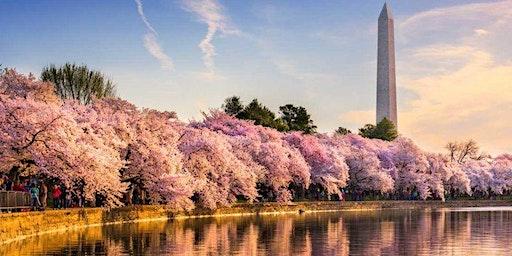Community Service Day: Cherry Blossom Festival