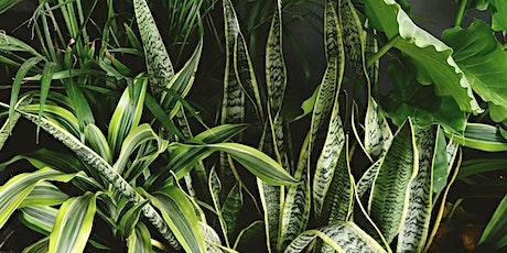 Indoor Plant Propagation - BP tickets