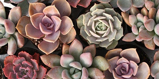 SOLD OUT!Valentine Succulent Planters at Goblin & The Grocer