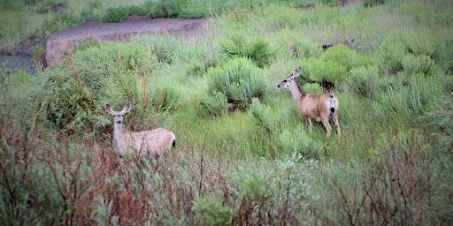 Region 2 Flagstaff, AZ Arizona Mule Deer Org Banquet and Fundrasier
