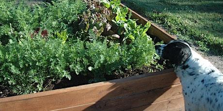 Raised Bed Gardening Workshop ~ Beaverlodge tickets