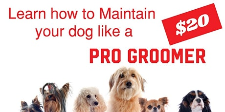 Learn how to Maintain your dog tickets