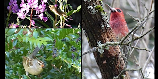 Birds in our Midst, Creating Gardens Filled with Life