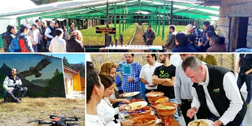 Campamento Upscaling Tech: Agroforest JAL