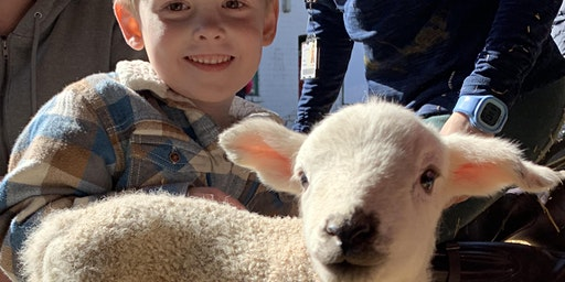 Lambing & Animals Weekend at Moreton Morrell College 2020