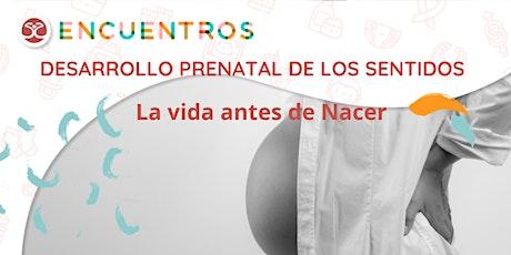 Desarrollo prenatal de los sentidos - La vida antes de nacer - entradas