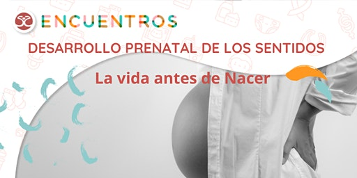 Desarrollo prenatal de los sentidos - La vida antes de nacer -