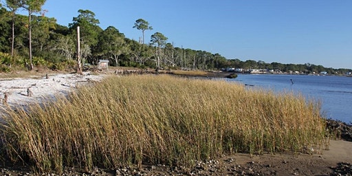 Sci-Cafe: Living Shorelines in Action