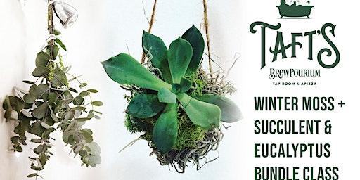 Winter Succulent & Eucalyptus Class