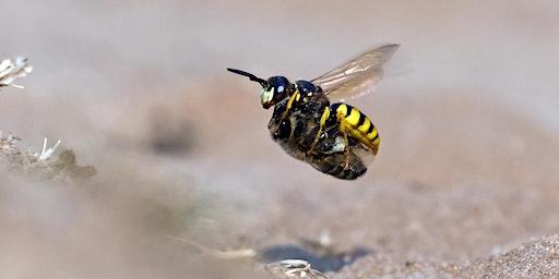 Surprising summer wildlife at RSPB Minsmere