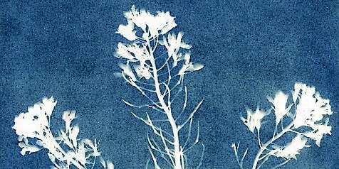 Discovery Day: Cyanotype Winter Plants